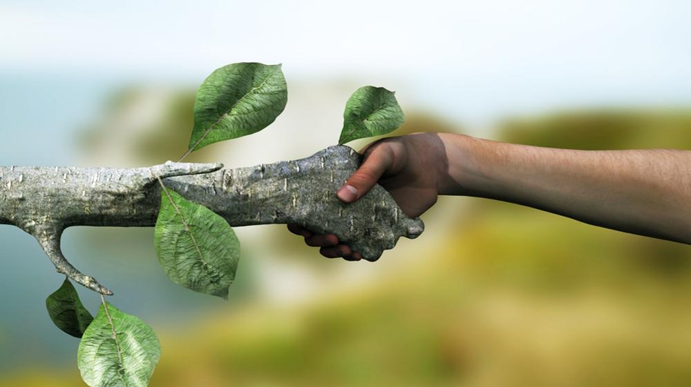 ONG e Ambiente: Quali Organizzazioni operano attivamente?